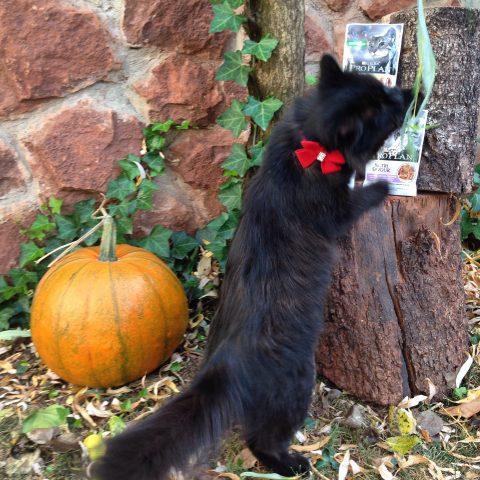 La gatita Chloé colaborando en una campaña de Purina Pro Plan Nutrisavour.