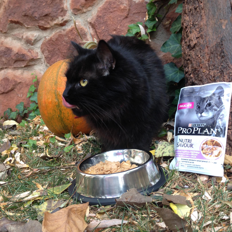 Purina Pro Plan Nutrisavour es un alimento delicioso para gatos