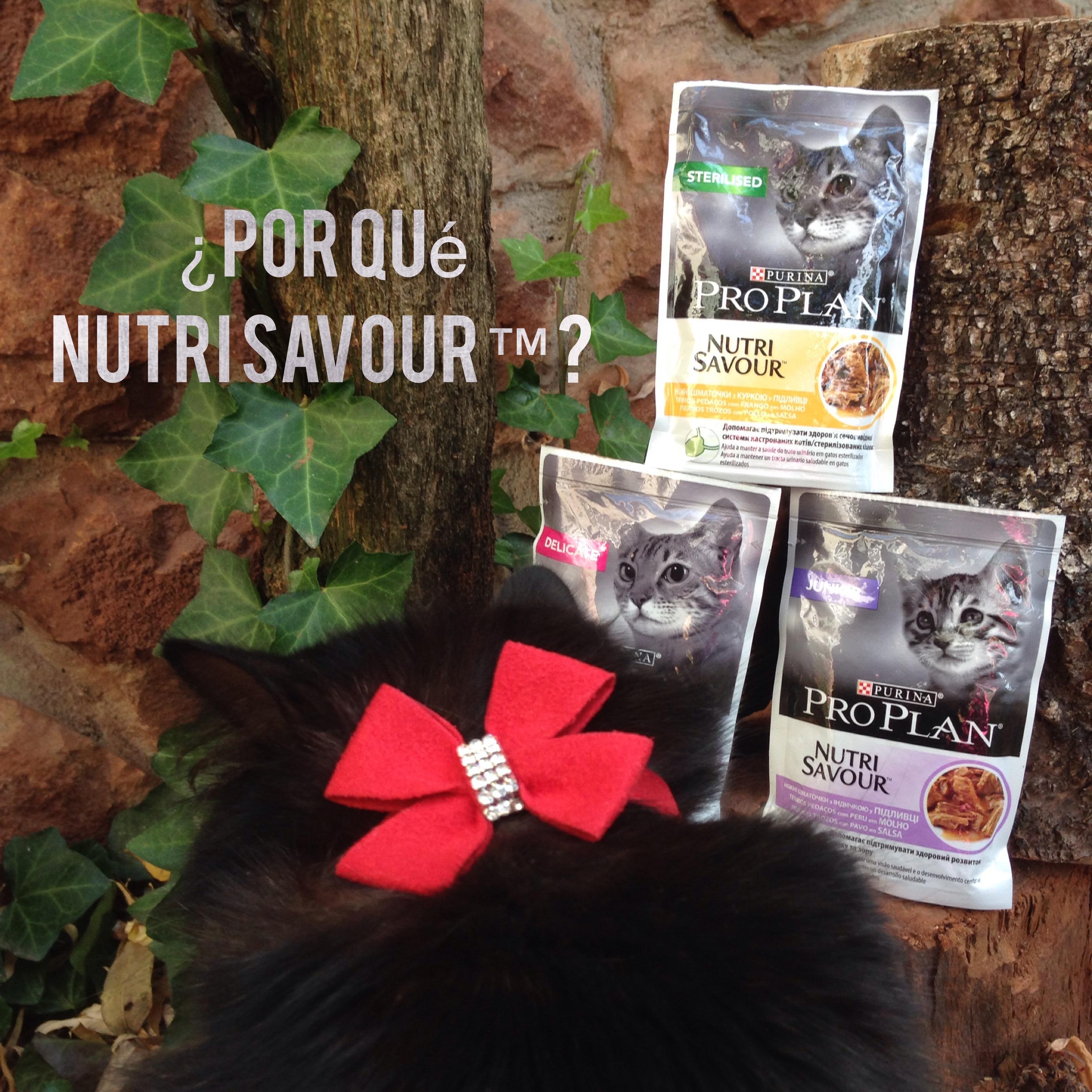 Purina Pro Plan Nutrisavour es un alimento húmedo que ayuda a mi gata Chloé a evitar problemas de cálculos renales
